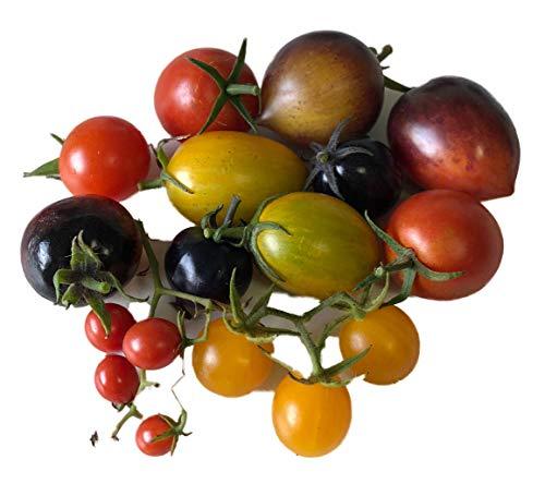 Zuckersüßer Tomaten-Samen Mix ★ Top Ertrag & Sehr Süß ★ 5 Arten by Samenchilishop