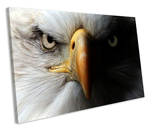 chuanghe3943 Unframe Canvas Printing American Bald Eagle Wildlife Animal Framed Canvas Print Bedroom Bathroom Decoration Wall Art - Bald Eagle Artwork