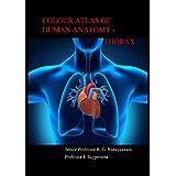 Colour Atlas of Human Anatomy-Thorax (English Edition)
