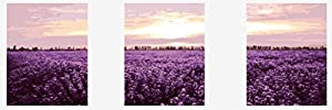 Wowdecor kit dipingere con i numeri per adulti bambini Junior principianti per anziani, dipinto di numeri set di 3pezzi Set–Sunset lavanda fiori di campo paesaggio 16x 20x P cm Frameless