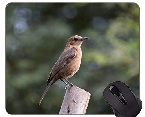 Spiel-Mausunterlage Gewohnheit, niedliche Natur des Vogels Mauspad