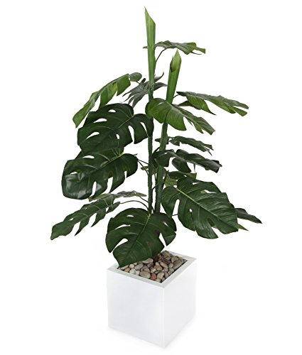 Closer To Nature T072D - Philodendron \\