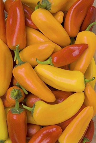Seedeo® Paprika Ferenc Tender (Capsicum annuum L.) 35 Samen BIO