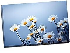Idea Regalo - Margherite Bianche su sfondo blu cielo Stampa Su Tela da Parete art grande 76,2x 50,8cm (numero X 50,8cm)