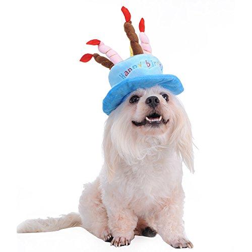molie-chapeau-casquette-chien-chiot-chat-animaux-ideal-pour-feter-anniversaire-de-votre-chien-chiot