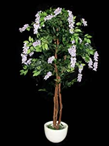 Fourwalls Wisteria Plant (Mixed Material, Purple)
