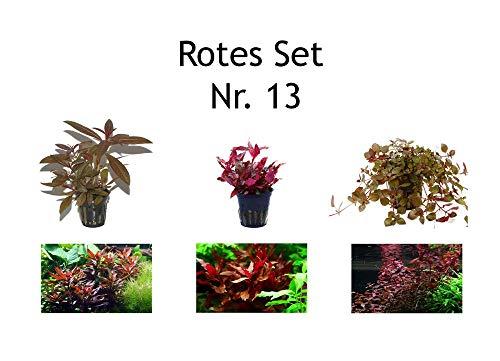 Tropica Pflanzen Set mit 3 schönen Roten Topf Pflanzen Aquariumpflanzenset Nr.13 Wasserpflanzen Aquarium Aquariumpflanzen