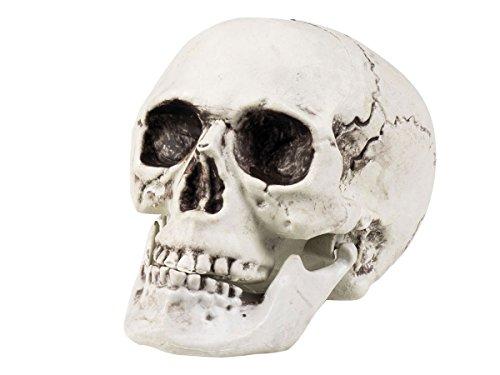 Alsino Totenschädel Skull Totenkopf 17 x 15 cm Deko Halloween Dekoration, weiß Kunststoff ()