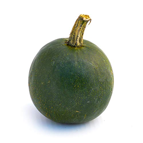 1 Rondini Kürbis (Zucchini-Kürbis - Rolet - Squash - Handgranate-Kürbis - James Squash) Speisekürbis | Dekokürbis