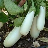 SeeKay Aubergine Snowy - 20 seeds - Vegetable