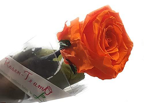 Rosen-te-amo Geschenk für sie - ECHTE Blume - 3 JAHRE haltbar OHNE WASSER - 1 haltbare Rose - unser EXKLUSIVE Blumen sind echt. Muttertags Geschenk perfekt auch als Blumenstrauß