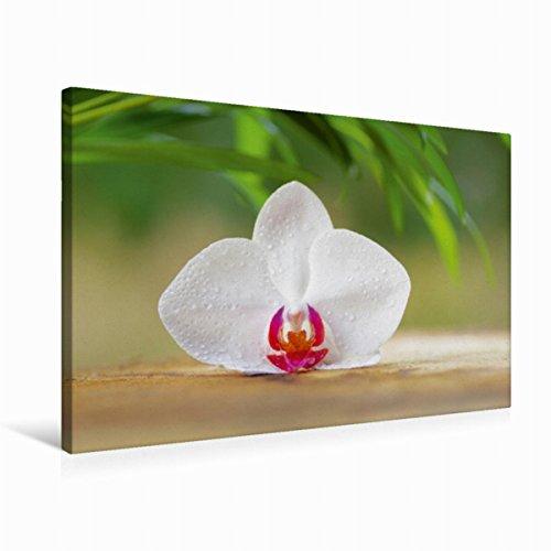 Calvendo Premium Textil-Leinwand 75 cm x 50 cm quer Orchideenblüte | Wandbild, Bild auf Keilrahmen, Fertigbild auf echter Leinwand, Leinwanddruck Gesundheit Gesundheit