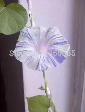 300 semi mistico arcobaleno Rose cespuglio di fiori, 3 stili diversi arcobaleno colorato semi di rosa, più misterioso dono