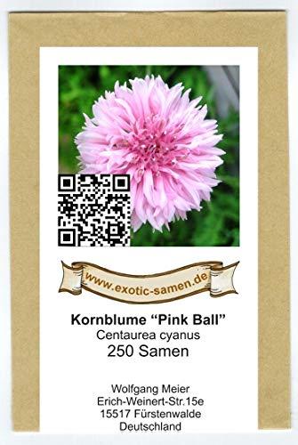Centaurea cyanus -Pinke Kornblume
