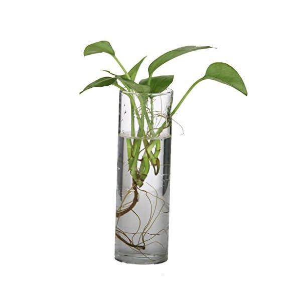 Botella Florero Cristal Colgante Pared Micro Paísaje Para Decoración de Flores Plantas