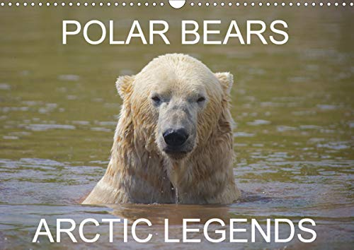POLAR BEARS - ARCTIC LEGENDS (Wall Calendar 2020 DIN A3 Landscape): 2 Male Polar Bears compete in a test of strength. (Monthly calendar, 14 pages ) (Calvendo Places)