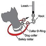 Cadrim Hundeleine für 2 Hunde | Führleine Hund | Dehnbare reflektierende Doppelleine 50 cm bis 80 cm für zwei Hunde - 4