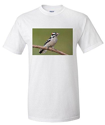 downy-woodpecker-premium-t-shirt