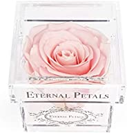 A 100% Real Rose That Lasts A Year - The Perfect Unique Gift for Women and Men, an Anniversary Gift, A Birthda