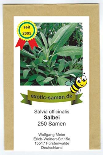 Salbei, echter Salbei - Bienenweide - Salvia officinalis - 250 Samen - Salvia Officinalis-salbei