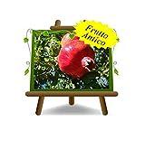Melograno Dente di Cavallo – pianta da frutto antico su vaso da 26 - albero max 200 cm - 4 anni