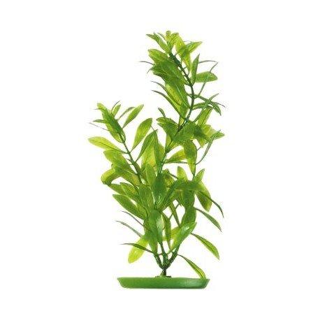 planta-hygrophila-50cm