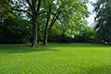 2 kg SHADY AREA UNDER TREES LAWN GRASS SEED SHADE - Supplied