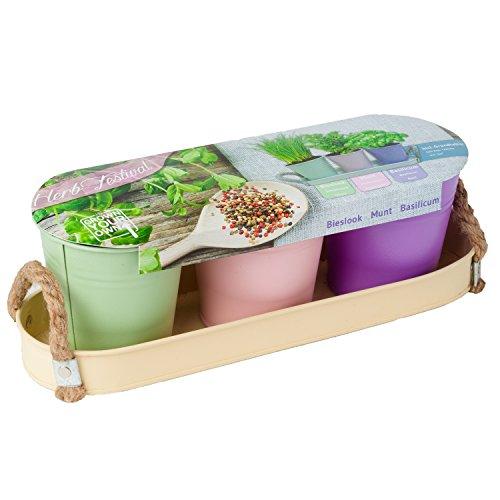 3 Zink-Eimer Zink-Tablett Pastell Kräuter-Set Kräutergarten Pflanzerde Samen von notrash2003®