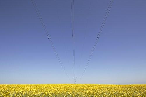 ron-bouwhuis-design-pics-canola-field-and-power-lines-east-of-nanton-alberta-canada-photo-print-4572
