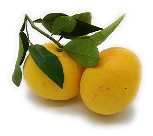 ARISTOS Grapefruit aus Griechenland Unbehandelt Zart und Saftig Weißfleischig Kilopreis