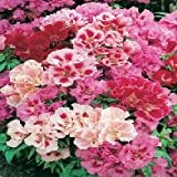 GODETIA Azalea Flowered Mixed Seeds