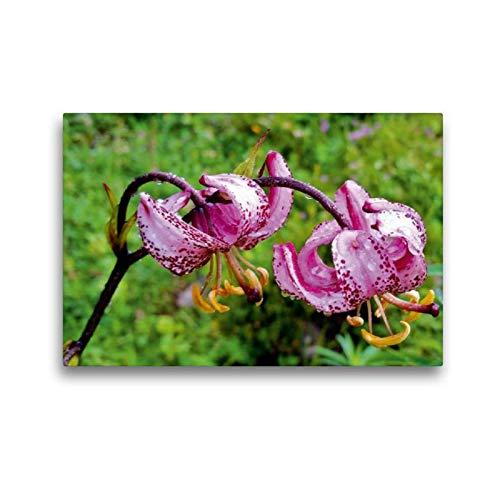 Calvendo Premium Textil-Leinwand 45 cm x 30 cm quer Türkenbund-Lilie | Wandbild, Bild auf Keilrahmen, Fertigbild auf echter Leinwand, Leinwanddruck