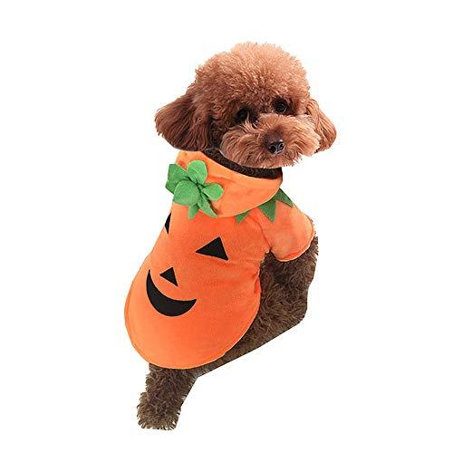 Kostüm Pumpkin Hunde - FZXPET Tier Herbst Winter Kleidung, Hund Katze Halloween Kürbis Kostüm, Haustier Cosplay Kostüme, Welpen Warme Outfits Hoodie, Devil Pumpkin Pet Dress Up,A,XS