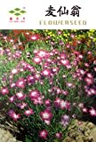 Semillas de Maíz Morado Agrostemma githago berberecho flor anual, paquete original, 30 semillas / Paquete