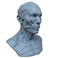 Earlywish NEW 10cm Human Model Anatomy Skull Head Muscle Bone Medical Artist Drawing