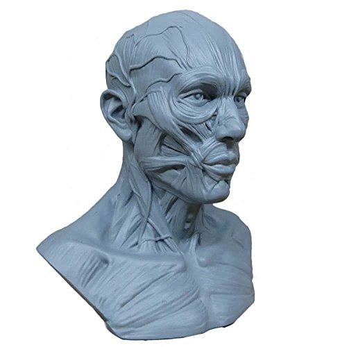 anatomia-earlywish-nuova-10cm-modello-teschio-muscolare-bone-medical-da-disegno