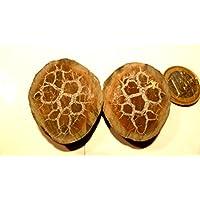 Septarien Paar, 28,70 g schwer, mit wunderschöner Zeichnung, Farben und Strukturen. Made by Nature. preisvergleich bei billige-tabletten.eu