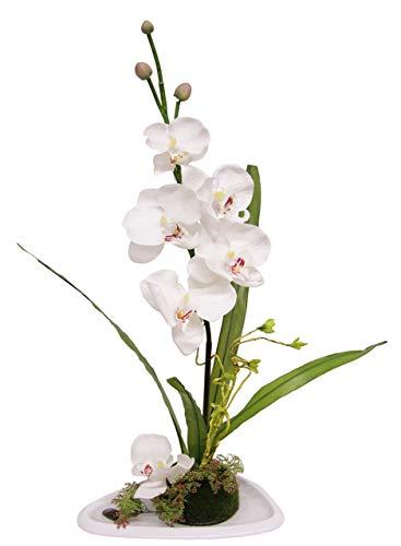Flair Flower Phalaenopsis auf Schale, Stoff, weiß, 50 x 24 x 16 cm
