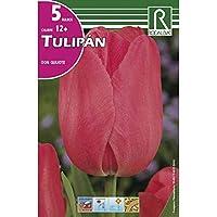Bulbos de tulipan don quijote (bolsa 5 bulbos)