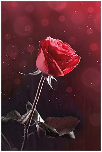 Wallario Acrylglasbild Rote Rose Single - 60 x 90 cm in Premium-Qualität: Brillante Farben, freischwebende Optik