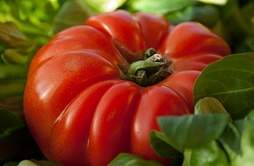 300 graines de tomate coeur de boeuf gros fruit rouge