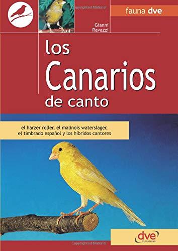 Los canarios de canto por Gianni Ravazzi