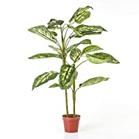Euro Flora Yapay Difenbahya Demet Dıeffenbachıa 90 Cm