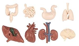 """Toob """"Safari Bulk Bolsa de órganos Humanos miniaturas"""