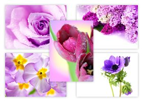 The Postcard Store - Paquete de 50 postales, diseño de flores
