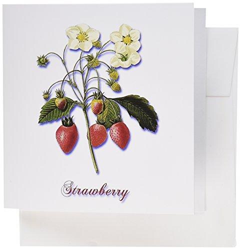 3drose Strawberry Blüten und Reifen roten Beeren Botanischen Print–Grußkarten, 15,2x 15,2cm, Set 6(GC 181169_ 1)