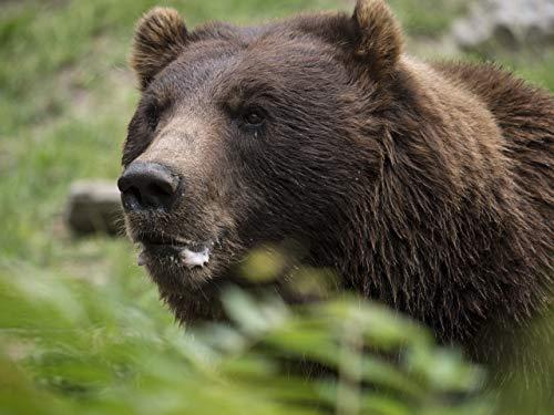 Das Bären-Paradies (Pelzigen Bären)