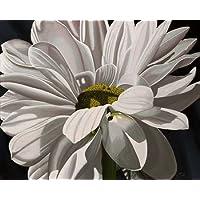 Feelingathome.it, STAMPA SU TELA 100% cotone INTELAIATA Black Tie Daisy cm 81x102 (dimensioni personalizzabili a richiesta)