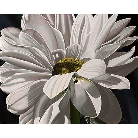 Daisy Black Tie Macoce, by Ellen-Stampa su tela in carta e decorazioni disponibili, Tela, nero, SMALL (20 x 16 Inches )
