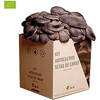 Amazon.es: Kits de cultivo en casa: Jardín
